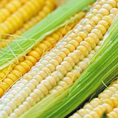Photo of corn - Genome Alberat chose the SmartSimple platform