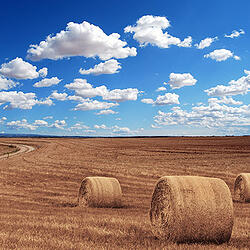 Photo of farm field - SmartSimple system is flexible