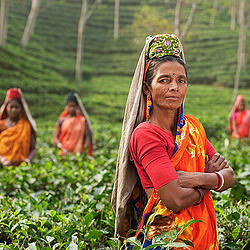 Photo of women in a farm - the foundation spent a great deal of money each month on user fees