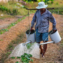 A rural farmer watering his crops